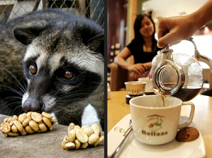 https://ammay26.files.wordpress.com/2011/12/kopi-luwak1.jpg?w=300